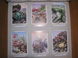 VETPLANTEN Planten Plantes Grasses Liebig Série Reeks 6 Chromos Nederlandse Taal Trading Cards Chromo - Liebig