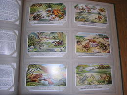 TIPISCHE KIKVORSACHTIGEN Batracien Grenouille   Liebig Série Reeks 6 Chromos Nederlandse Taal Trading Cards Chromo - Liebig
