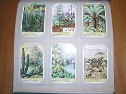 PLANTEN UIT VOORHISTORISCHE TIJDEN Plantes Liebig Série Reeks 6 Chromos Nederlandse Taal Trading Cards Chromo - Liebig