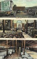 1905/20 - PULAU  PINANG  PENANG  , Gute Zustand , 2 Scan - Malaysia