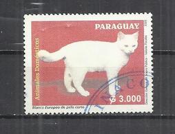 PARAGUAY 2005 - DOMESTIC CAT - POSTALLY USED OBLITERE GESTEMPELT USADO - Paraguay