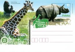 Cp  1560 Poland Polish ZOO's 2011 Giraffe Rhino Gorilla - Rinoceronti