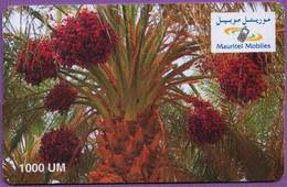 Telecarte °_ Mauritanie-Palmier-1000 UM-épreuve Sans Code- R/V - Mauritanie