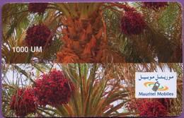 Telecarte °_ Mauritanie-Palmier-1000 UM-Variété-épreuve Découpe Décalée- R/V - Mauritanië