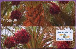 Telecarte °_ Mauritanie-Palmier-1000 UM-Variété-épreuve Découpe Décalée- R/V - Mauritania