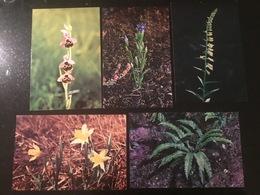Plantes Protégées Photos: Bettembourg - Cartes Postales