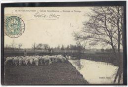 41239 . LA MOTTE BEUVRON .  COLONIE SAINT MAURICE . MOUTONS AU PATURAGE  . CIRCULEE . 1905 - Lamotte Beuvron
