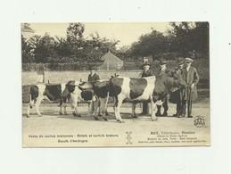 56 - PONTIVY - Ventes De Vaches Bretonnes Bidets Et Norfolk Bertons BOT ( Signature )   Vétérinaire  Animé Bon état - Pontivy