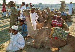 Oman - Camel Race - Oman