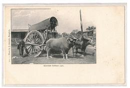 Siam -Siamese Bullock Cart,Antonio No 315 - Thaïlande