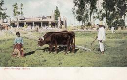 MEXICO , 1901-07 ; Planting - Paysans