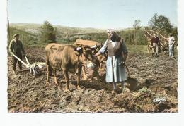 ROYERE SCENE DE LABOURAGE   AVEC VACHE  ET AGRICULTEURS - Royere