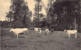 Linkebeek (Vl. Br.) - Paysage – Vaches. Ed. Nels. - Linkebeek