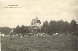 Hoogboom-Kapellen - Hortensia-Hof - Kapellen