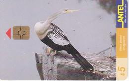Nº 73 TARJETA DE URUGUAY DE ANTEL DE UNA ANHINGA (PAJARO-BIRD) - Uruguay