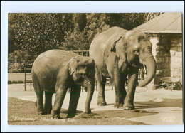Y13036/ Johannesburg Südafrika  ZOO Tierpark 1942 Foto AK Elefanten  - Animaux & Faune