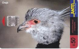 Nº 105 TARJETA DE URUGUAY DE ANTEL DE UN CHAJA (PAJARO-BIRD) - Uruguay