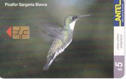 Nº 123 TARJETA DE URUGUAY DE UN PICAFLOR (CHIP ROJO) (PAJARO-BIRD) - Uruguay