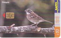 Nº 129 TARJETA DE URUGUAY DE UN CHINGOLO (CHIP ROJO) (PAJARO-BIRD) - Uruguay