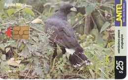 Nº 152 TARJETA DE URUGUAY DE UN AGUILA NEGRA (CHIP G4 NEGRO) (PAJARO-BIRD) EAGLE - Uruguay
