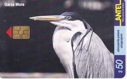Nº 153 TARJETA DE URUGUAY DE UNA GARZA MORA (CHIP G4 NEGRO) (PAJARO-BIRD) - Uruguay