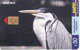 Nº 153 TARJETA DE URUGUAY DE UNA GARZA MORA (CHIP G5 ROJO) (PAJARO-BIRD) - Uruguay