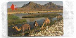 Oman - Al Mughsayl Camels - 52OMNA - 2001, 175.000ex, NSB - Oman