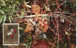 50291 Suriname, Maximum 1961,coffee Picker At Work  Le Cafè  The Coffee - Ernährung