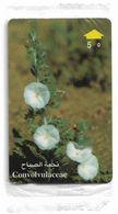 Oman - Convolvulaceae Flower - 49OMND - 2000, 50.000ex, NSB - Oman