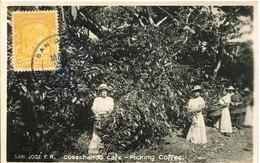 50293 Costa Rica , Maximum 20 March 1933 ,coffee Picker At Work  Le Cafè  The Coffee - Ernährung