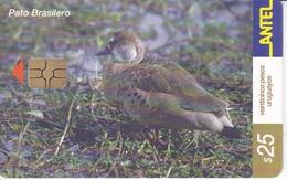 Nº 209 TARJETA DE URUGUAY DE UN PATO BRASILERO (CHIP G5 ROJO) (PAJARO-BIRD) - Uruguay