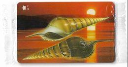 Oman - Sea Shells - Tibia Insulaechorab Curta - 52OMNG - 2001, 250.000ex, NSB - Oman