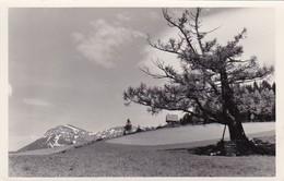 AK NÖ - Bezirk Neunkirchen - Landschaftsbild - Fotograf Schneidhofer - 1959  (46377) - Neunkirchen