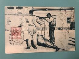 PALERMO COSTUMI SICILIANI  TRASPORTO DEL TONNO 1901 - Palermo