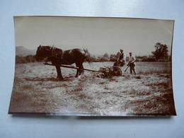 PHOTO ANCIENNE - 14 COURSEULLES - 1909 - Scène Animée - Plaatsen