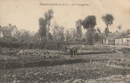 CPA-62-NORENT FONTES-Les Cressonnières - Other Municipalities