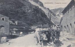 0379 - CARRARA - TRASPORTO MARMI (CON BUOI) - Carrara