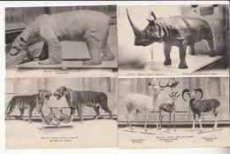 CPA - France 13 - Marseille - 7 Cartes Muséum D'Histoire Naturelle -  Achat Immédiat - (cd016 ) - Musées