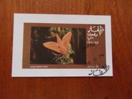 DHUFAR Tematica FARFALLE - Papillons