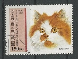 LSJP GUINE FAUNA DOMESTIC CAT - Domestic Cats