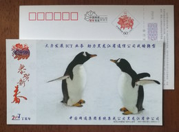 Penguin,China 2007 China CNC Group Developing ICT Business Advertising Pre-stamped Card - Fauna Antartica