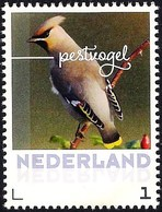 Netherlands Nederland 2017 - Bird - Bohemian Waxwing - Unclassified