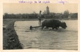 CARTE PHOTO SAIGON LABOURAGE DE LA RIZIERE - Viêt-Nam