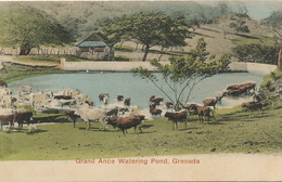 Grand Ance Watering Pond Grenada Hand Colored Undivided Back - Grenada