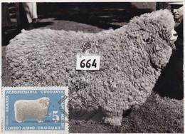 RIQUEZA AGROPECUARIA URUGUAYA - ROMNEY MARSH, OVEJA SHEEP MOUTON. URUGUAY 1966 FDC MAXIMUM CARD RARE -LILHU - Granjas
