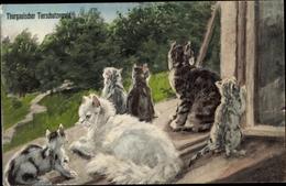 Artiste Cp Thurgauischer Tierschutzverein, Katzen Auf Einem Fensterbrett - Animals