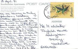 Barbados 1981 St James Green-throated Carib Hummingbird Kolibri Viewcard - Kolibries