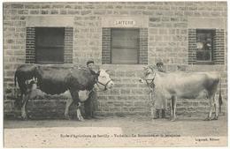 Ecole D'Agriculture De SARTILLY (50) – Vacherie. La Normande Et La Jerseyaise. Lagoupil, édit., Flers. - France