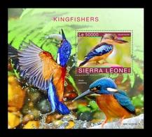 Sierra Leone 2019 Mih. 11436 (Bl.1799) Fauna. Birds. Kingfishers MNH ** - Sierra Leone (1961-...)