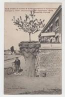 Hingene  Bornem   Cam Kegels-Costa's Kriekappelboom In Hollen Trunk Geplaat In 1901 ... - Bornem